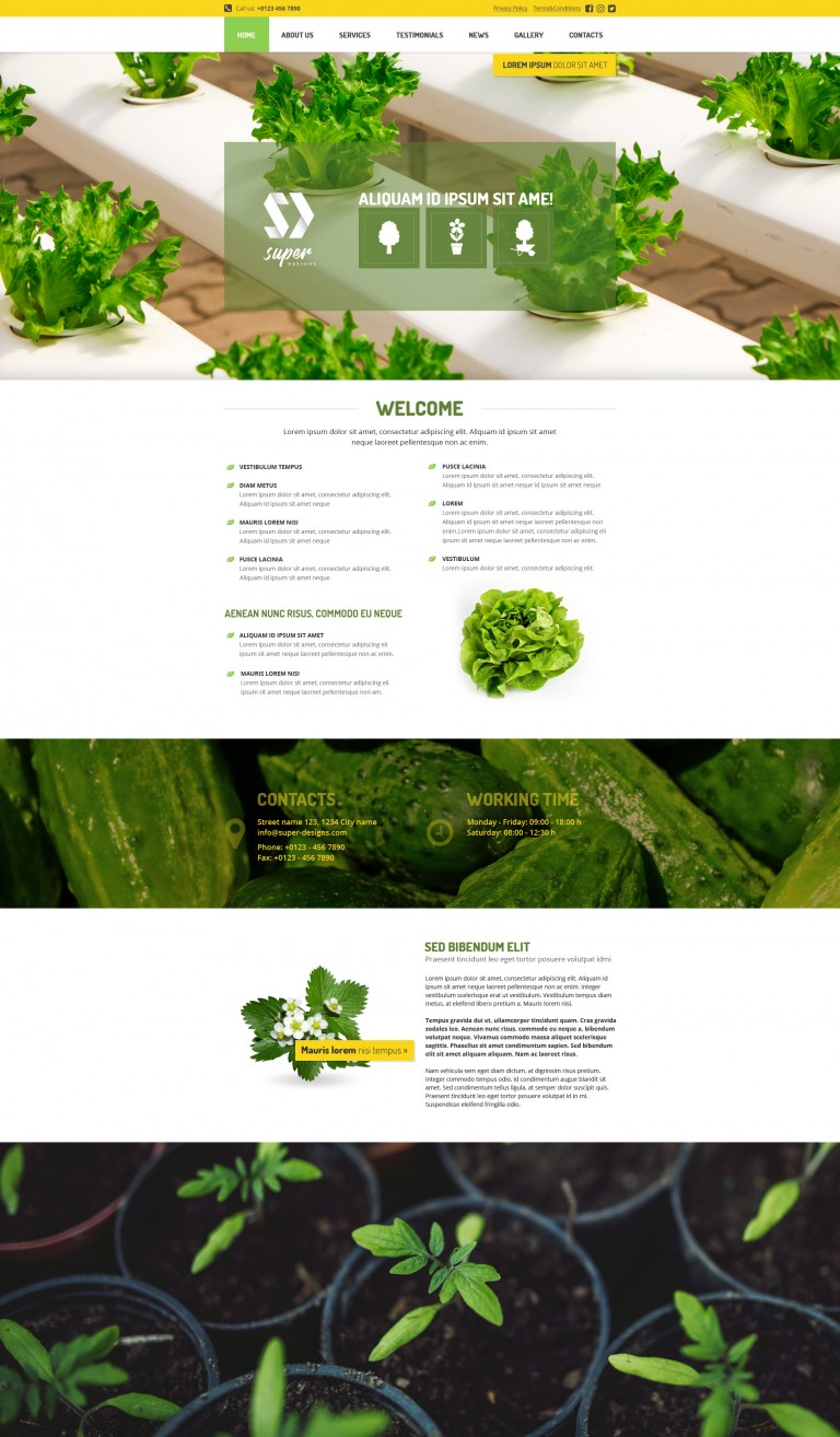 Vegetable Garden PSD template